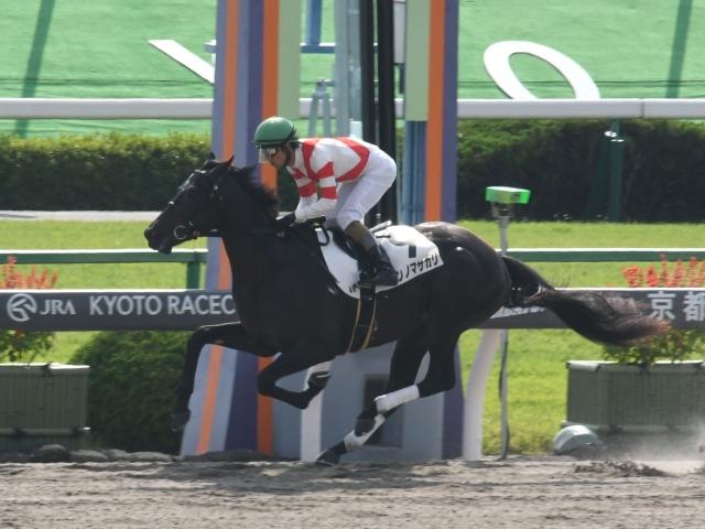 和田竜二騎手騎乗の2番人気キンノマサカリが勝利(c)netkeiba.com