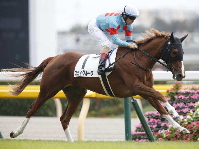 楽な手応えで5馬身差の快勝をおさめたスカイグルーヴ(c)netkeiba.com、撮影:下野雄規