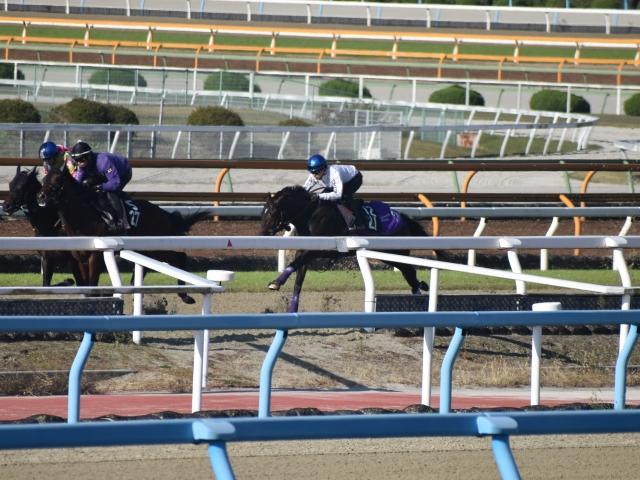 東京スポーツ杯2歳Sに向け、安定感のある走りをみせたラインベック(写真中央、撮影:井内利彰)