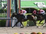 【兵庫ジュニアGP】 JRA所属の出走予定馬および補欠馬について