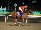 【大井・ハイセイコー記念】来年のクラシック戦線を見据えた若駒が集結/レースの見どころ(地方競馬)