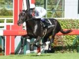 【ラジオNIKKEI杯京都2歳S】登録馬 マイラプソディ、ミヤマザクラなど9頭