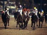 【ジャパンC】 伝説の名勝負の数々が今、ここに! 全競馬ファン納得の「競馬データベースクラシック」