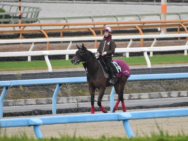 11月28日のゲート試験に合格したアスワンサンセット(撮影:井内利彰)