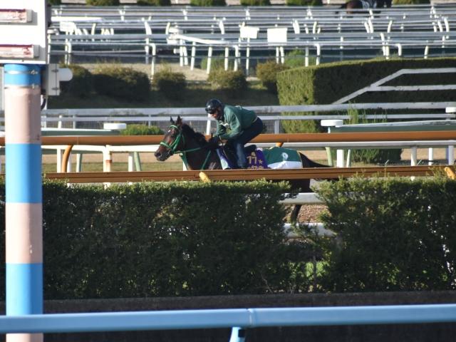 有馬記念へ向けて調整を進めるキセキ(撮影:井内利彰)