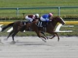 【兵庫GT】(12月27日、園田) JRA所属の出走予定馬および補欠馬について