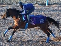 アーモンドアイ有馬記念に登録 国枝師「出走できる態勢は整えていく」
