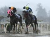 【水沢・桐花賞】ヤマショウブラックが一騎打ちから抜け出しV/地方競馬レース結果