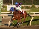 【園田クイーンセレクション】ステラモナークが逃げ切り7馬身差圧勝/地方競馬レース結果
