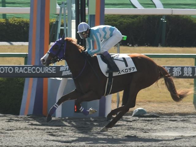 京都3Rの新馬戦は武豊騎手騎乗の1番人気スペロデアが勝利