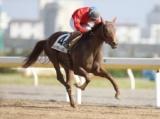 【浦和・ニューイヤーC】春の大レースを占うマイル重賞/地方競馬見どころ