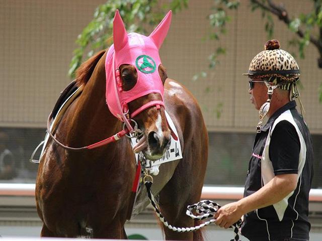 『サラ系』の10歳馬サンマルホームが登録抹消(ユーザー提供:キムラさん、撮影日は昨年6月9日)