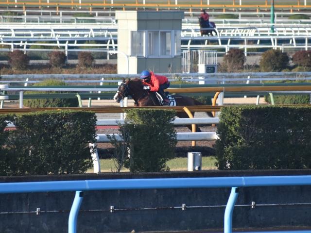 日経新春杯に向け、最終追い切りを行ったロードヴァンドール(撮影:井内利彰)