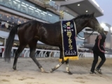 【川崎記念】ケイティブレイブ・チュウワウィザードらが選定/登録馬発表