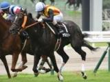 【愛知杯予想】牝馬同士で見直したいアロハリリー/JRAレース展望