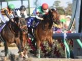 【競馬ファンが選ぶ最優秀ダート馬】無敗のクリソベリルが最多得票/最終結果発表