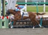 【中山3R新馬戦】シェダルが人気に応えて大差圧勝/JRAレース結果