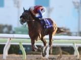 【大井・桃花賞】カラースキームが6馬身突き放し、3連勝で準重賞勝利!/地方競馬レース結果