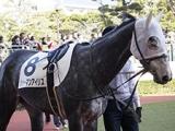 【冬季繁殖馬セール】ミスパスカリの孫ジャーマンアイリスが最高価格の1485万円