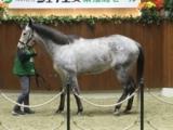 北海道市場で冬季繁殖馬セールが開催