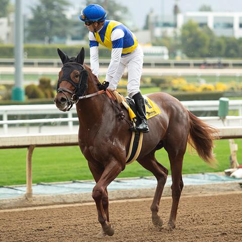 TCKステーブル所属馬として初勝利を果たしたアークネーション(提供:TCK競馬組合)
