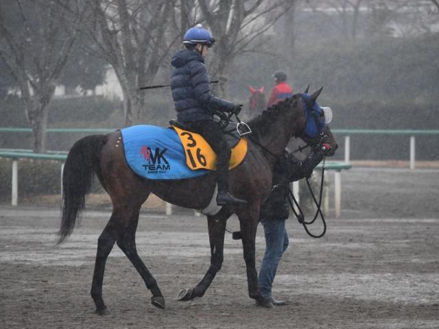 野中騎手を背に併せ馬の追い切りを消化したオセアグレイト(撮影:佐々木祥恵)