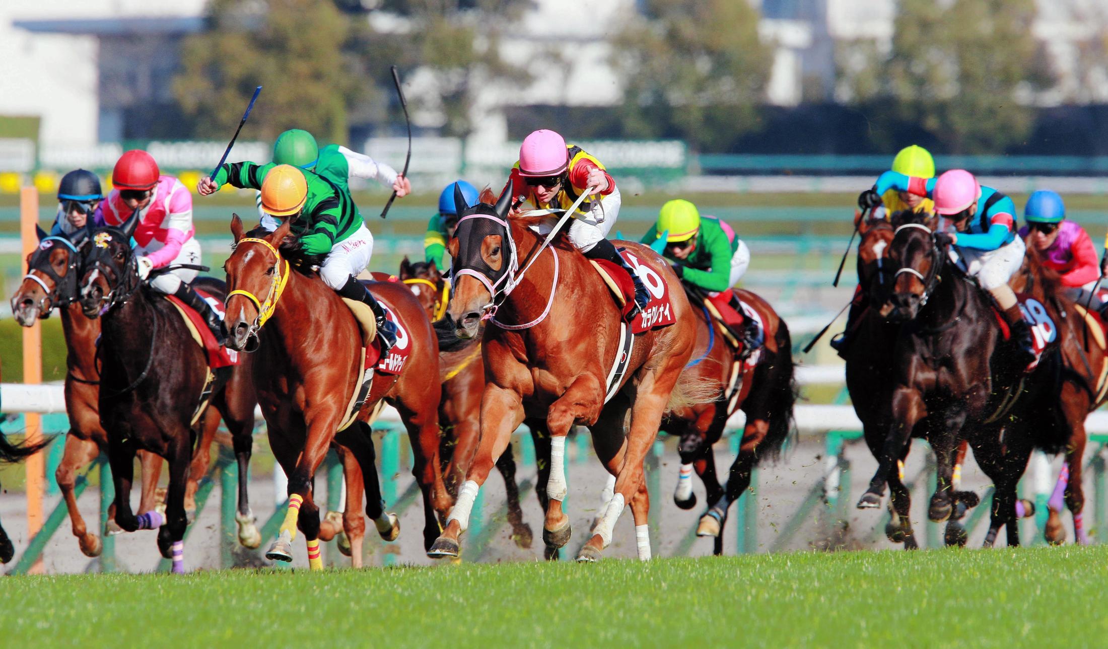 馬場の真ん中を突き抜け、重賞初制覇を飾ったカラクレナイ(中央)=2017年3月12日、阪神競馬場