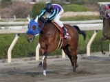 【園田ユースC】ステラモナークが逃げ切り6馬身差圧勝/地方競馬レース結果