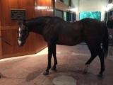 【海外競馬】米の名種牡馬エーピーインディが死亡、31歳
