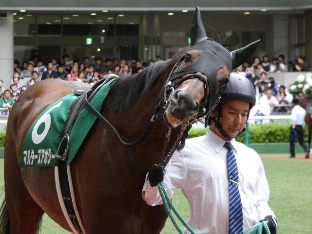 快速馬マルターズアポジーが引退(写真は2019年七夕賞出走時、ユーザー提供:ヤングマンタワーさん)