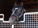 ウォーエンブレムが死亡 2002年ケンタッキーダービー馬、日本で種牡馬として活躍