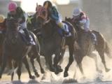 【LVR名古屋・第2戦】中島良美騎手が3番人気デュエットカラーで女性騎手最先着の2着!/地方競馬レース結果