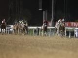 【海外競馬】ドバイWCデーは無観客競馬に、新型コロナウイルス問題で