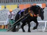 【地方競馬】ばんえい競馬、今年度の発売金額が初の300億円超え! 単独開催最高額を更新