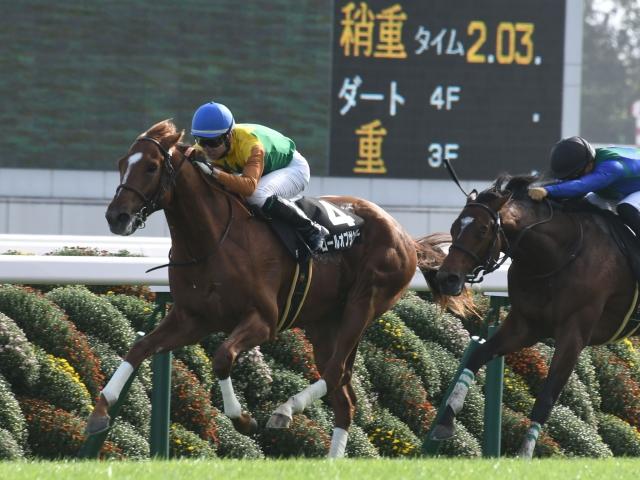 次走は京都新聞杯を予定するロールオブサンダー(C)netkeiba.com