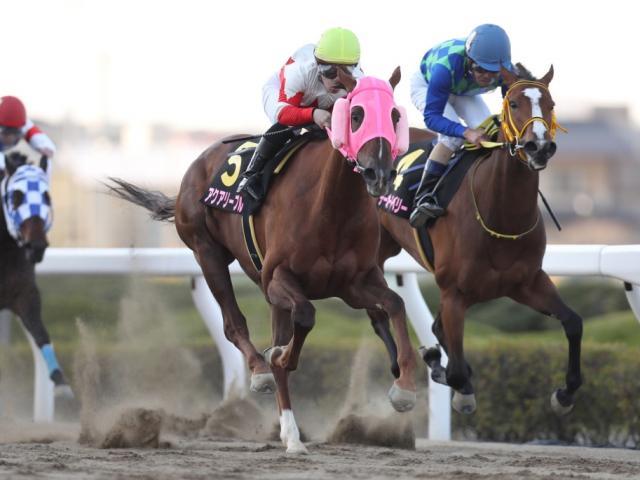 アクアリーブルが南関東牝馬三冠の一冠目を制した(撮影:高橋正和)