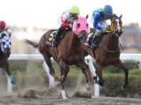 【浦和・桜花賞】アクアリーブルが抜け出しV!母娘で牝馬三冠達成!/地方競馬レース結果
