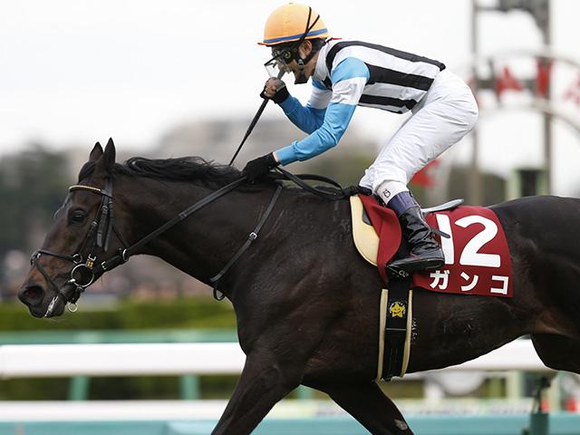 ナカヤマフェスタ産駒唯一の重賞勝ち馬ガンコ(撮影:下野雄規)