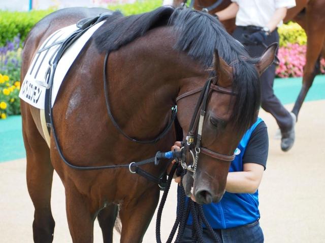 15番人気で3着に入着したベストユエンモン(写真は新馬戦出走時、ユーザー提供:(り・ω・こ)さん)
