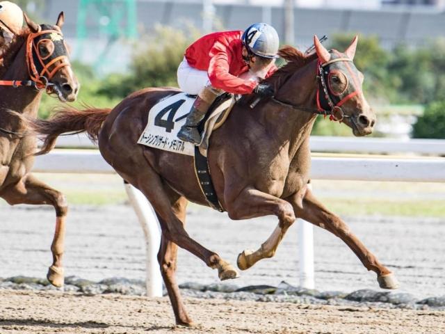 東京湾カップ予想】東京ダービー出走権をかけて、混戦を断つのはどの馬 ...