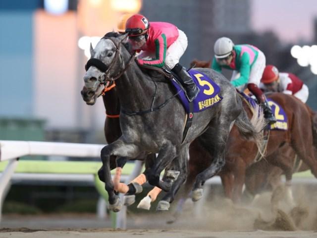 東京大賞典優勝馬のオメガパフュームに期待(撮影:高橋正和)