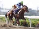 【浦和・さきたま杯結果】8歳馬ノボバカラが差し切り3年半ぶりの重賞V