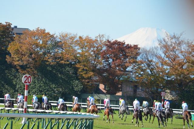 6月からは第3回開催が始まる東京競馬場(c)netkeiba.com