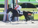 【5/31の注目厩舎・安田隆行厩舎】ダノンスプレンダー現級突破へ意欲/馬三郎