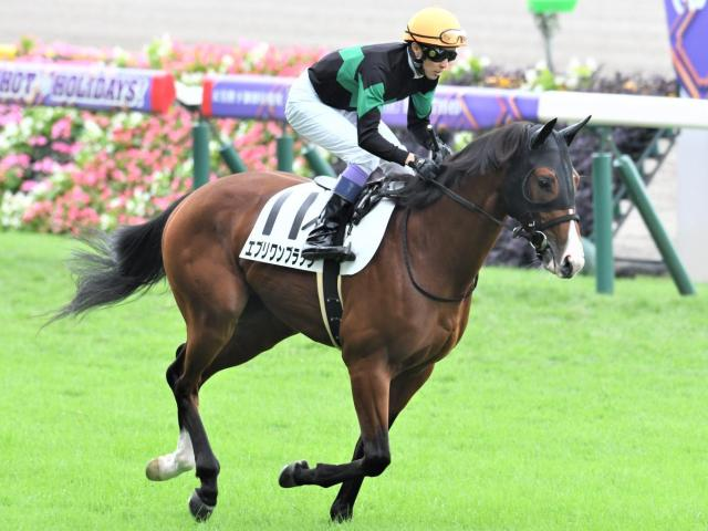 良血馬エブリワンブラックが2勝目を狙う(c)netkeiba.com、ユーザー提供:mailaさん