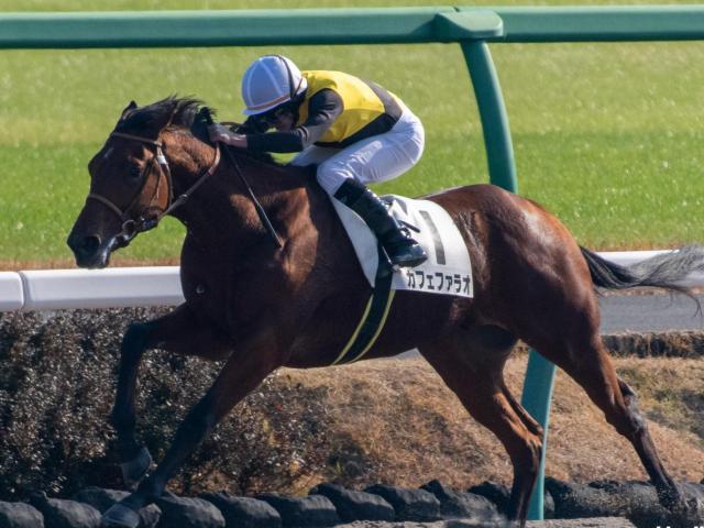 ユニコーンSで圧勝劇を見せたカフェファラオはJDD参戦へ(c)netkeiba.com、ユーザー提供:Natsumiさん
