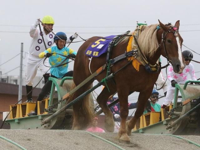 昨年は荻野琢真騎手が2年連続4度目の総合優勝(写真提供:ばんえい十勝)