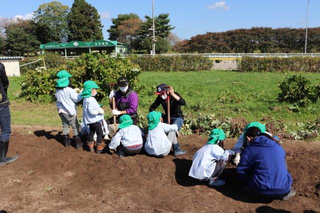 水沢競馬場でさつまいもの収穫祭(写真提供:岩手県競馬組合)