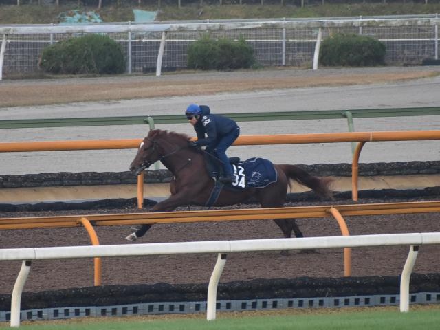前走アイビーSでタイム差なしの2着と好走したラーゴムは8枠9番(c)netkeiba.com、11月25日撮影:井内利彰