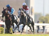 【香港国際競走】美浦所属馬3頭が香港に到着